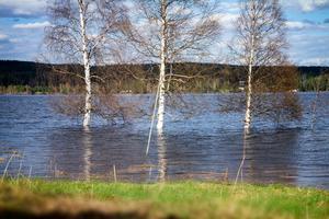 Vattennivåerna är höga på flera håll i landet.