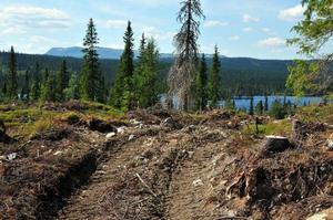 Spår efter SCA avverkning i Lillklumpvattnet, i trakterna             av Hotagen, ligger i fjällnära terräng och är ett av de områden Naturskyddsföreningen synat. Foto: Hans Sundström