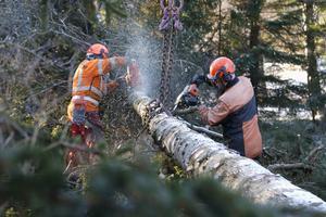 På bara några minuter har Leif Lindblad och Calle Möller skalat trädstammen som lyfts bort från hustaket med hjälp av en mobilkran.