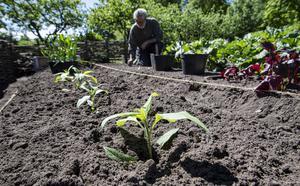Den odlare som främst inriktar sig på avkastning har nog börjat i fel ända. Den som istället frågar sig vad jorden behöver för att komma i balans och som långsiktigt bygger upp en rik och bördig jordmån kommer tids nog att belönas, skriver Mats Wilzén. Foto: Johan Nilsson, TT.