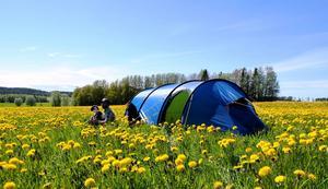 450 blå tält ska sättas upp på Sveriges camp på det stora scoutlägret i Japan.