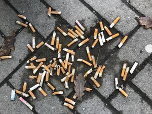 Cigarettfimpar är bland det vanligaste skräpet.