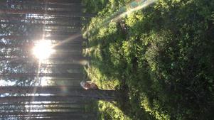 Ellen 6 år på sin absolut bästa lekplats; i skogen.  Foto: Emma Hamlund