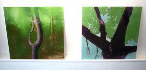 Träd är en viktig del av Susanne Torstenssons utställning. Till vänster ser vi ett träd på Öland och till höger ett från Israel.
