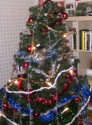 Inte behöver man ha så många julkulor i granen när man har en katt som ställer upp! Katten Sid klättrar upp i julgranen varje år men granen har konstigt nog aldrig ramlat omkull!