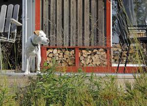 Maria Flodin Ekström och Mats Flodins  hund spanar ut över sjön.