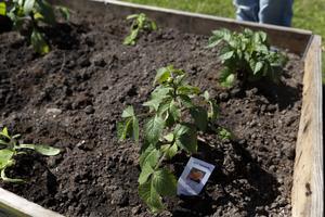 Mikaela känner sig trygg med att odla blommor. Nu vill hon lära sig mer om grönsaksodling.