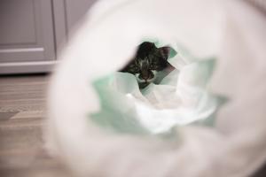 När Fritz tröttnade på uppmärksamheten gömde han sig i sin tunnel.