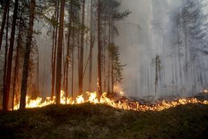 Bild från skogbranden utanför Kårböle och Ängra, sommaren 2018.