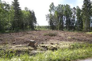 Många stormskadade träd har avverkats och upparbetats i skogen i god tid innan den första juli. På grund av att industrin inte hinner ta emot allt, blir det istället liggande längs väg.