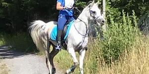 Hästen Baqir strax innan den försvann från Rimborittens distanstävling i Lovisedal utanför Rö.
