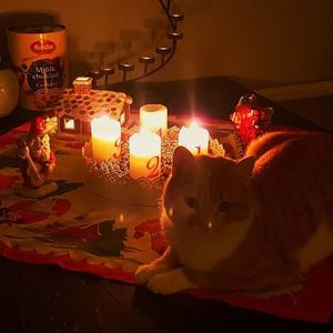 84) Katten Knut myser i värmen i väntan på julen. Foto: Christer Hast