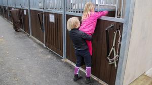 Ibland kan man behöva en kompis hjälp om man vill titta in till hästen.