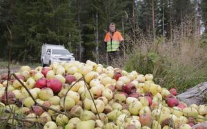Äpplena invid Björsjövägen blev oemotståndliga för områdets älgar.