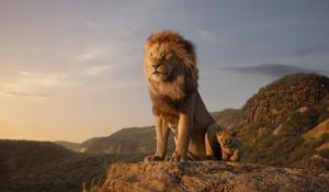 Lejonkungen visas på Bio Vågen i september. Foto: Disney Enterprises/Pressbild