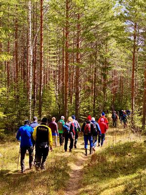 Så fint i gammelskogen inom Siljansfors försökspark.