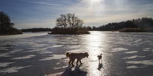 Just nu blir det ingen hundrastgård i Rättvik i kommunal regi. Man hänvisar istället till de naturliga omgivningarna. Foto Martina Holmberg / TT