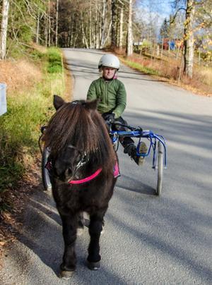 I juni fick Alice ut sin ponnytravlicens, och sedan dess har hon tävlat flitigt på travbanorna.