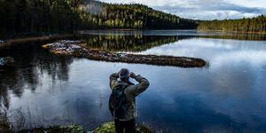 Vändåtberget. En av länets äldsta skogar med urgamla tallar och vild miljö.