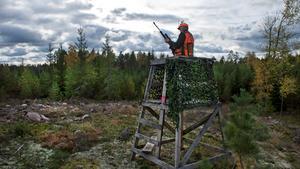 På Jägareförbundet ser man mycket positivt på initiativet med en utökad tillsyn under björnjakten.
