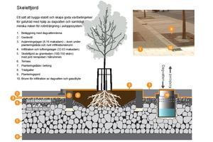 illustration: Örjan Stål, VIÖS AB. Så kallade trädgropar, det vill säga planteringar med träd, där flera olika typer av lager i marken gör att dagvattnet fördröjs och vissa föroreningar och partiklar fångas upp, innan vattnet når de allmänna ledningarna.