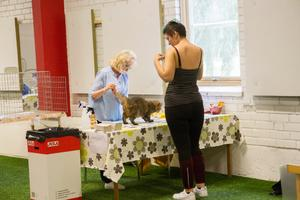 Det fanns fyra olika domare för helgens kattutställning. Mrs. Tatyana Tarasenko från Vitryssland, Mrs. Olga Abramova från Ryssland, Mr. Tomas Balchiunas från Lithauen och Mr. Peter Moormann från Nederländerna.