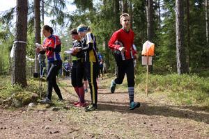 Tvådagarstävlingen Tisarträffen avlöpte i stort sett utan dramatik. Undantaget var Stefan Gunnarssons närkontakt med ett vildsvin någon kilometer innan målgång vid söndagens tävling i H65-klassen.