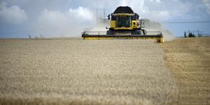 Om EU:s jordbruksstöd skärs ner så måste det göras på rätt sätt. För minskade jordbruksstöd drabbar inte främst rika storbönder, utan främst de mindre bönderna. Och dessutom innebär lägre stöd högre matpriser för konsumenterna. Foto Björn Lindgren, TT.