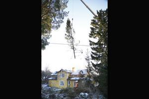 Högt över husen lyfter mobilkranen den 2,2 ton tunga och 25 meter långa granen som legat över ett hus i Skeppsmyra.