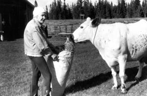 Anna Karlsson, 76 år, på Långåbodarnas fäbodvall 1989.