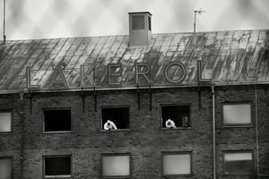 Detta är utställningens bästa bild. De två arbetarnas vita kontrast mot det skitiga åbäket till hus.