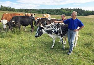 Håkan och Synnöve Häggdin, Häggby Gård startade gårdsmejeri när mjölkpriset sjönk.