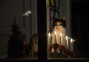 Katten Stina. Foto Ingrid Sylsjö