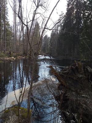 Testeboåns naturreservat i Oslättfors. Foto: Privat