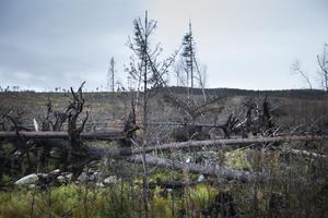För att kunna fatta rätt beslut har nästan samtliga bestånd besökts. Några av de krångligare områdena är där marken brunnit hårt och stora träd vält.