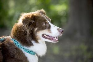 En park för hundar i Östersund, föreslår Alvin i sin insändare. Foto: Christine Olsson / TT