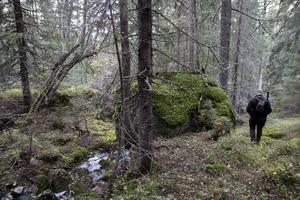 Skogen på Blacksåsberget är varierad, här finns både lövskog och gammal barrskog