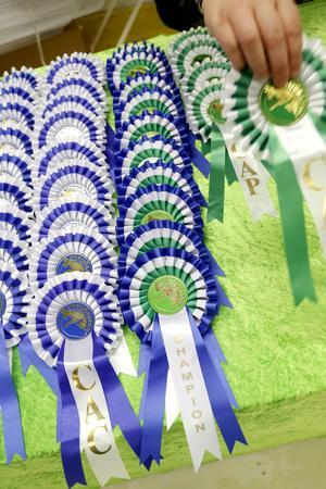 Redan dagen före tävlingen radas priserna upp på ett bord.  Nära 500 katter kommer att bedömas av domare från sex olika länder under helgen.