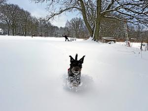 Snö och kyla. Många hundar mår dåligt när det blir kallt. Framförallt småväxta hundar som har tunn päls.