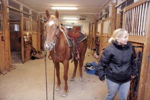 Eva Carlsson gör i ordning hästen Joysan för ännu ett träningspass på lördagen.