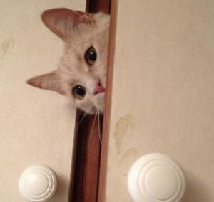 349) Världens busigaste Zelda, 8 år . Henne kan man hitta överallt, tom i ett överskåp på en garderob bland lakan . Ibland är hon väldigt svår att hitta. Blev ett ögonblick som min mamma lyckades fånga. Den säger rätt mycket om vad denna speciella katt är för en buse. Foto: Marie Hansson Peters