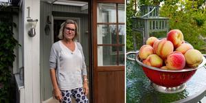Mona Hyllengren har lyckats odla persikor på sin kolonilott på Södra Kolonin.