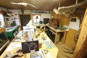 Ett rum med modeller och skelett av däggdjur.