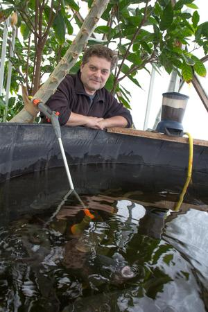 Björn Oliviusson matar tilapia-fiskarna i växthuset.