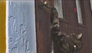 Senap brukar öppna ytterdörren hemma, speciellt när det är kallt ute.Foto:  Johannes Törnqvist