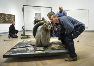 Riksantikvarieämbetets utredare Kaj Thuresson undersöker det uppstoppade djuret och konstaterar att det inte luktar get, men väl målarfärg.