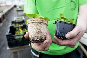 En ny cellulosakruka ska ersätta plasten vid plantering. Den är bara att sätta direkt i rabatten.