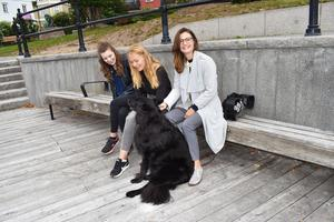 Egen sommar- företagaren Tora Holmström omgiven av sina ledare Josefine Halleström (t.v) och Ebba Gunarsson (t.h), och Ebbas hund Java. Samtliga är överens om att Egen sommar är lärorikt – oavsett om man vill fortsätta som entreprenör eller ej.