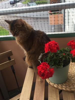 Finaste Prince spanar från balkongen. Alltid händer det någe. Foto: Lena Viklund.