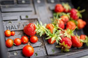 Körsbärstomaterna och jordgubbarna längtar efter mer sol och värme. Foto: Bengt Pettersson